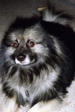 Imelda on the alert, late 1980s.