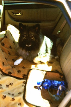 MyKee on a summer car trip, circa early 2000s.
