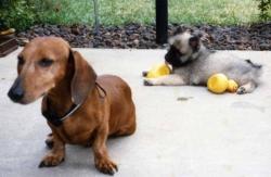Siegfried and Imelda in backyard, 1985.